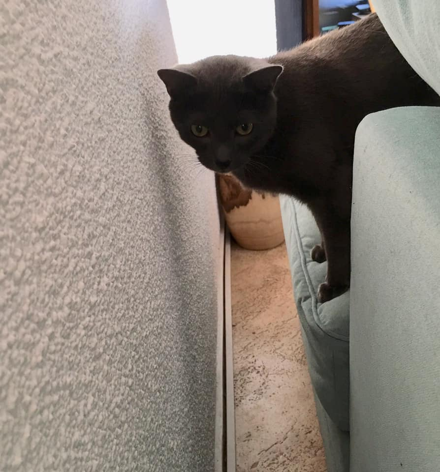 Grey hinter dem Sofa